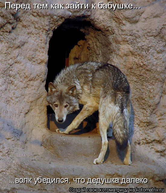 Котоматрица: Перед тем как зайти к бабушке... ...волк убедился, что дедушка далеко