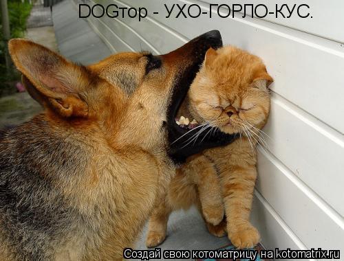 Котоматрица: DOGтор - УХО-ГОРЛО-КУС.