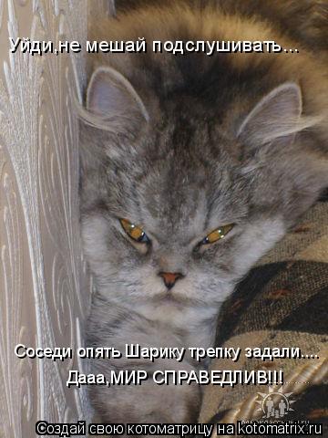 Котоматрица: Уйди,не мешай подслушивать... Соседи опять Шарику трепку задали.... Дааа,МИР СПРАВЕДЛИВ!!!