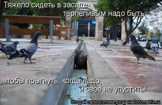 Котоматрица: Тяжело сидеть в засаде- терпеливым надо быть, чтобы прыгнуть, когда надо, и своё не упустить!