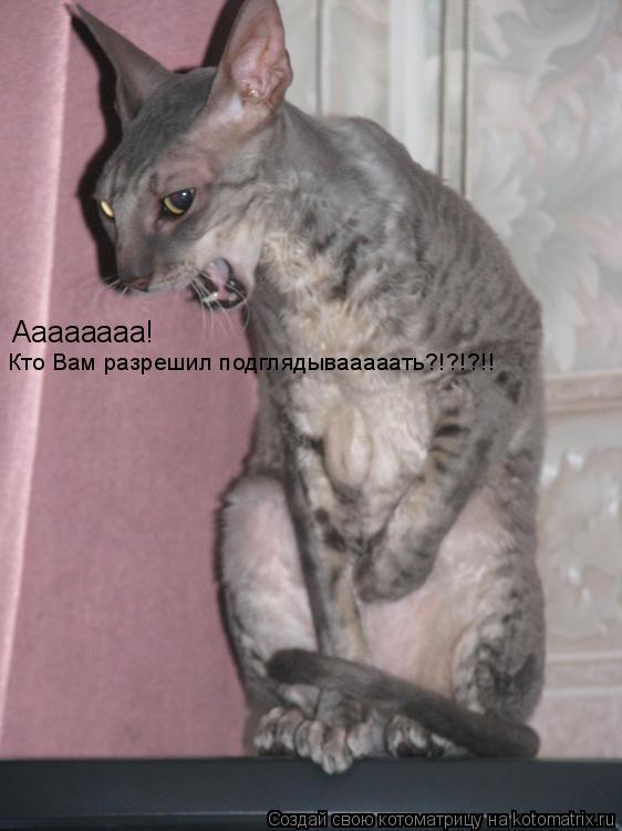 Котоматрица: Аааааааа! Кто Вам разрешил подглядывааааать?!?!?!!