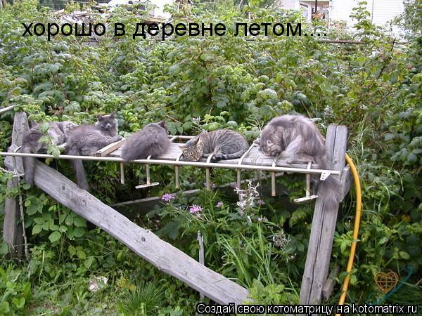 Котоматрица: хорошо в деревне летом....