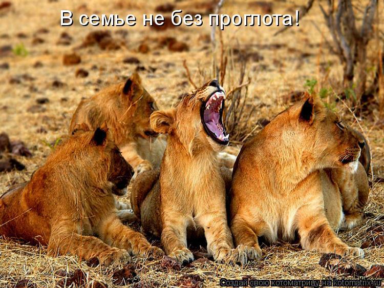 Котоматрица: В семье не без проглота!