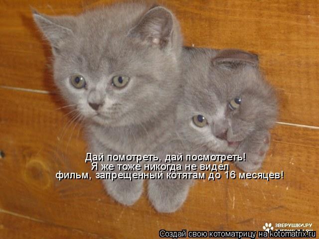 Котоматрица: Дай помотреть, дай посмотреть! Я же тоже никогда не видел  фильм, запрещенный котятам до 16 месяцев!