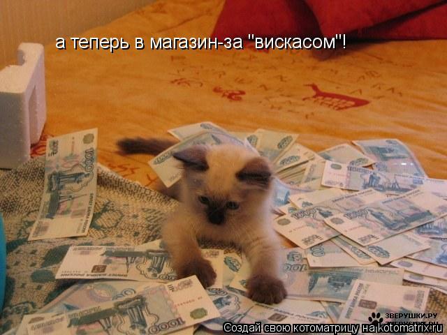 "Котоматрица: а теперь в магазин-за ""вискасом""!"