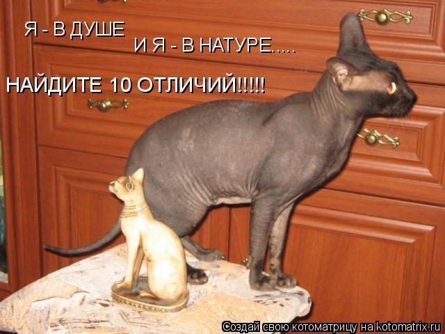 Котоматрица: Я - В ДУШЕ И Я - В НАТУРЕ..... НАЙДИТЕ 10 ОТЛИЧИЙ!!!!!