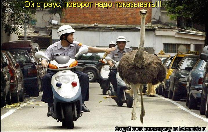 Котоматрица: Эй страус, поворот надо показывать!!!