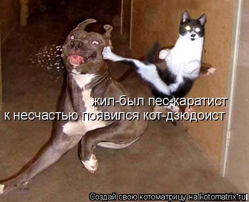 Котоматрица: жил-был пес-каратист к несчастью появился кот-дзюдоист