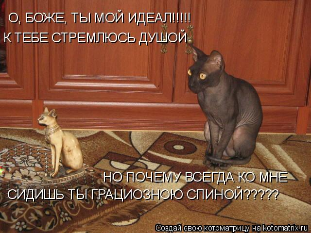 Котоматрица: О, БОЖЕ, ТЫ МОЙ ИДЕАЛ!!!!! К ТЕБЕ СТРЕМЛЮСЬ ДУШОЙ НО ПОЧЕМУ ВСЕГДА КО МНЕ  СИДИШЬ ТЫ ГРАЦИОЗНОЮ СПИНОЙ?????