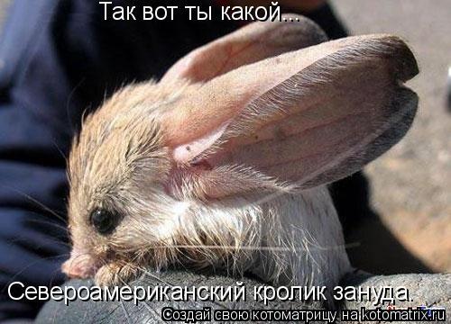 Котоматрица: Так вот ты какой... Североамериканский кролик зануда.