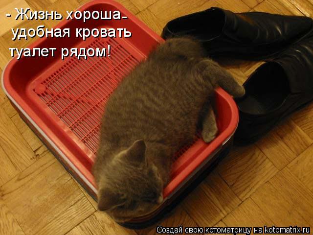 Котоматрица: - Жизнь хороша удобная кровать туалет рядом! -