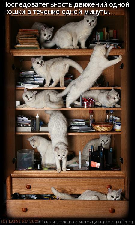 Котоматрица: Последовательность движений одной  кошки в течение одной минуты...