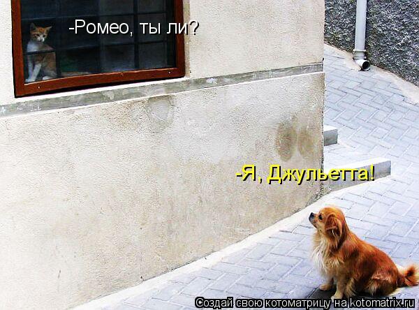 Котоматрица: -Ромео, ты ли? -Я, Джульетта!