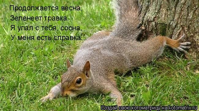 Котоматрица: Продолжается весна, Зеленеет травка. Я упал с тебя, сосна, У меня есть справка...