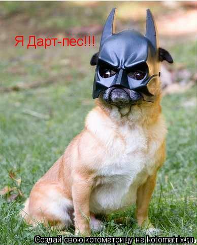 Котоматрица: Я Дарт-пес!!!