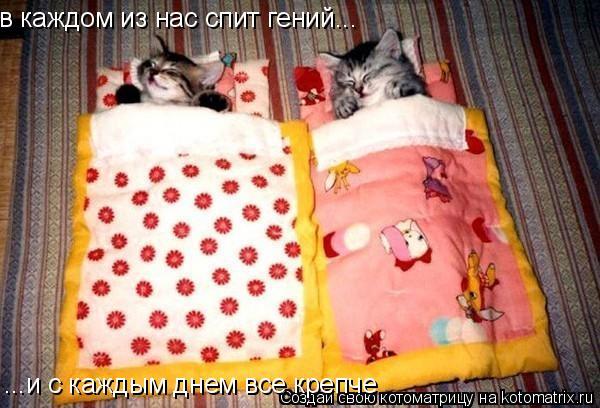 Котоматрица: в каждом из нас спит гений... ...и с каждым днем все крепче
