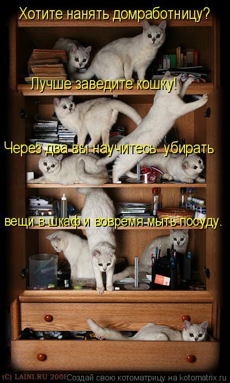 Котоматрица: Хотите нанять домработницу? Лучше заведите кошку! вещи в шкаф и вовремя мыть посуду. Через два вы научитесь  убирать