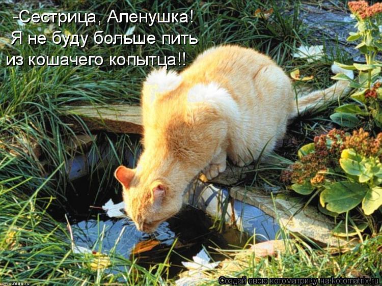 Котоматрица: -Сестрица, Аленушка!  Я не буду больше пить из кошачего копытца!!