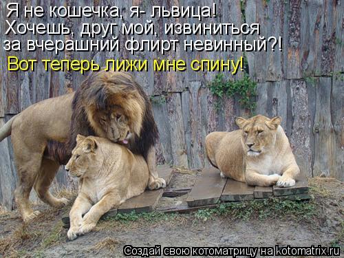 Котоматрица: Я не кошечка, я- львица! Хочешь, друг мой, извиниться за вчерашний флирт невинный?! Вот теперь лижи мне спину!
