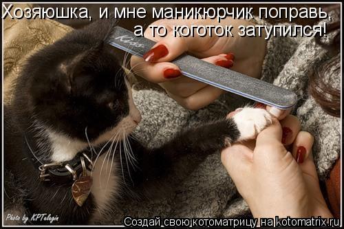 Котоматрица: Хозяюшка, и мне маникюрчик поправь, а то коготок затупился!