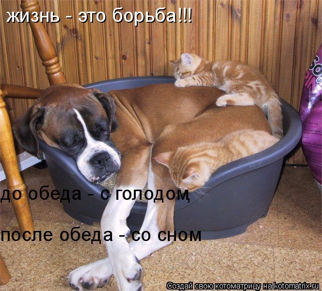 Котоматрица: жизнь - это борьба!!! до обеда - с голодом после обеда - со сном ,