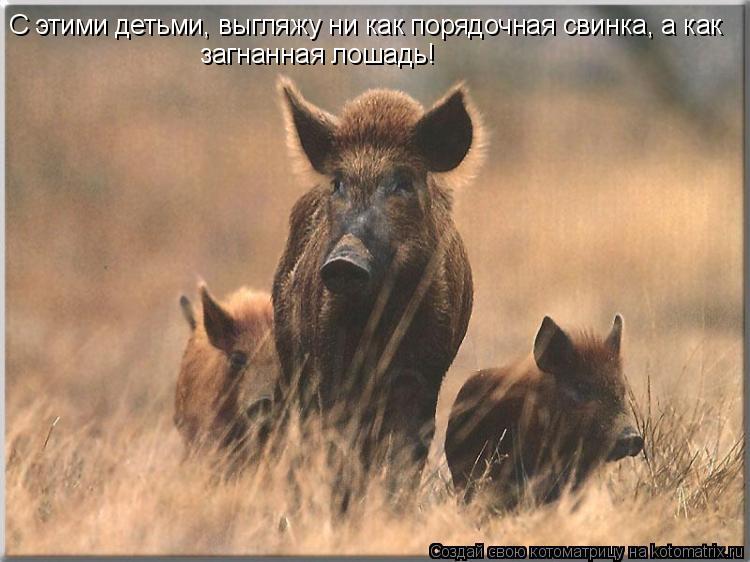 Котоматрица: С этими детьми, выгляжу ни как порядочная свинка, а как загнанная лошадь!