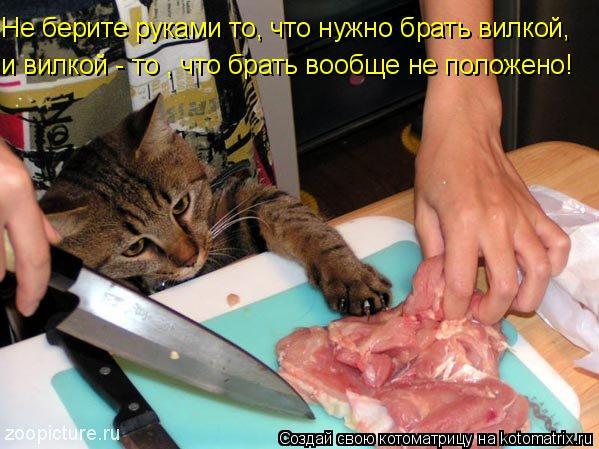 Котоматрица: Не берите руками то, что нужно брать вилкой, и вилкой - то , что брать вообще не положено!