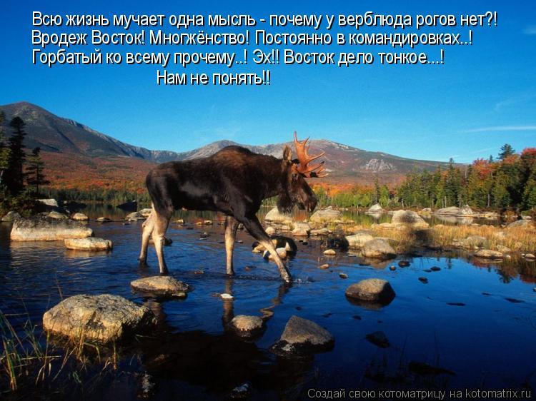 Котоматрица: Всю жизнь мучает одна мысль - почему у верблюда рогов нет?! Вродеж Восток! Многжёнство! Постоянно в командировках..! Горбатый ко всему прочем