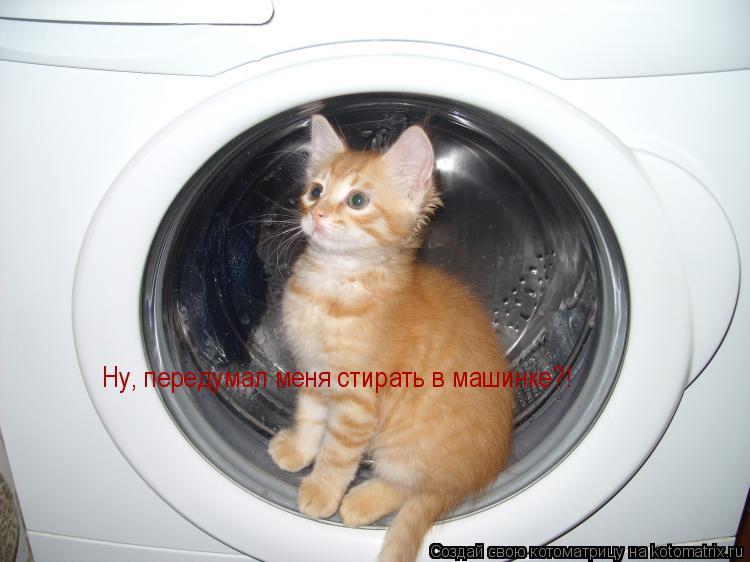 Котоматрица: Ну, передумал меня стирать в машинке?!