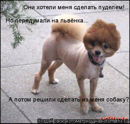 Котоматрица: Они хотели меня сделать пуделем!.. Но передумали на львёнка... А потом решили сделать из меня собаку?!
