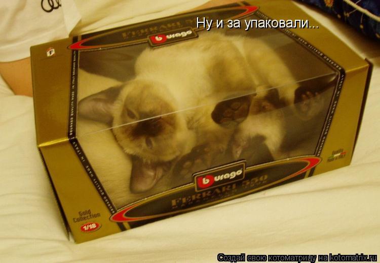 Котоматрица: Ну и за упаковали...