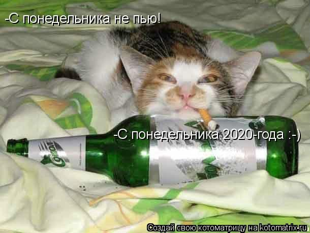 Котоматрица: -С понедельника не пью! -С понедельника 2020-года :-)