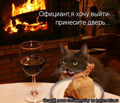 Котоматрица: Официант,я хочу выйти- принесите дверь...