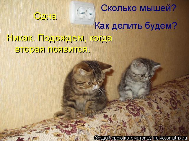 Котоматрица: Сколько мышей? Одна Никак. Подождем, когда вторая появится. Как делить будем?