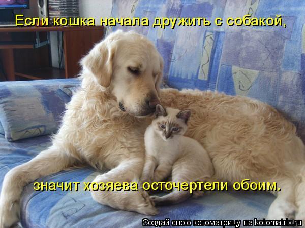 Котоматрица: Если кошка начала дружить с собакой,  значит хозяева осточертели обоим.