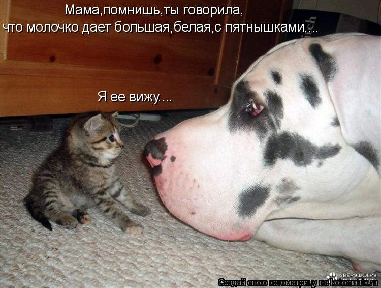 Котоматрица: что молочко дает большая,белая,с пятнышками.... Мама,помнишь,ты говорила, Я ее вижу....