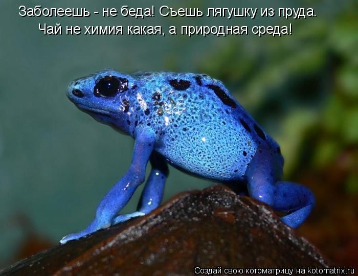 Котоматрица: Заболеешь - не беда! Съешь лягушку из пруда. Чай не химия какая, а природная среда!