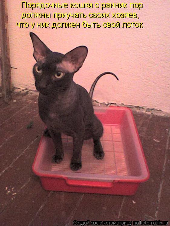Котоматрица: Порядочные кошки с ранних пор должны приучать своих хозяев, что у них должен быть свой лоток