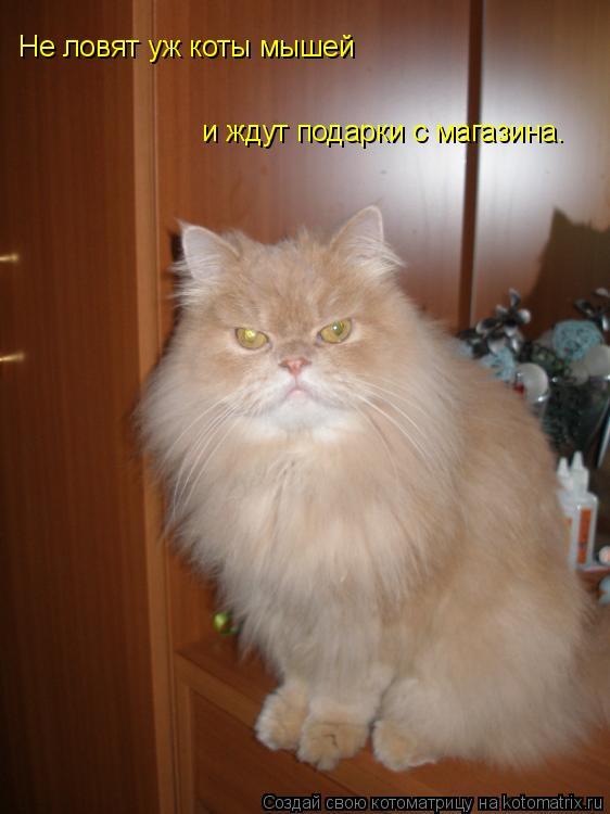 Котоматрица: Не ловят уж коты мышей  и ждут подарки с магазина.