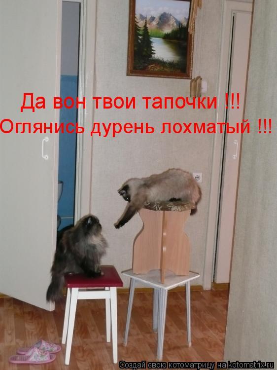 Котоматрица: Да вон твои тапочки !!! Оглянись дурень лохматый !!!