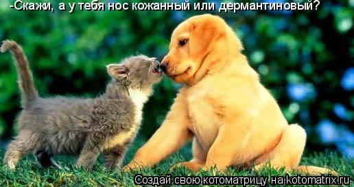 Котоматрица: -Скажи, а у тебя нос кожанный или дермантиновый?
