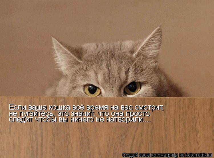 Котоматрица: Если ваша кошка всё время на вас смотрит, не пугайтесь, это значит, что она просто следит чтобы вы ничего не натворили....