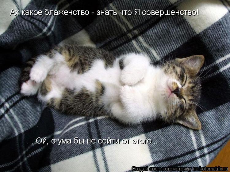 Котоматрица: Ах какое блаженство - знать что Я совершенство! ... Ой, с ума бы не сойти от этого...