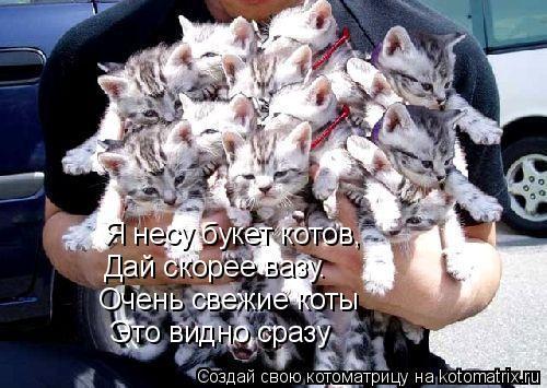 Котоматрица: Я несу букет котов, Дай скорее вазу.  Очень свежие коты   Это видно сразу