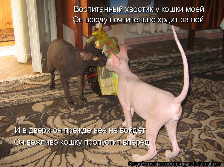 Котоматрица: Воспитанный хвостик у кошки моей Он всюду почтительно ходит за ней. И в двери он прежде неё не войдёт Он вежливо кошку пропустит вперёд