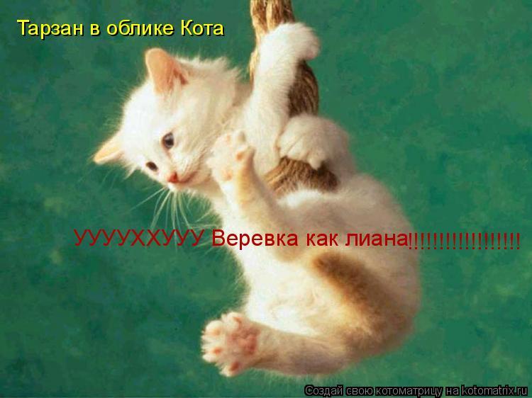 Котоматрица: Тарзан в облике Кота УУУУХХУУУ Веревка как лиана !!!!!!!!!!!!!!!!!!