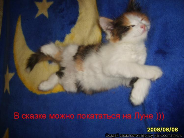 Котоматрица: В сказке можно покататься на Луне )))