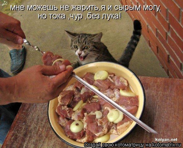 Котоматрица: мне можешь не жарить,я и сырым могу, но тока ,чур ,без лука!
