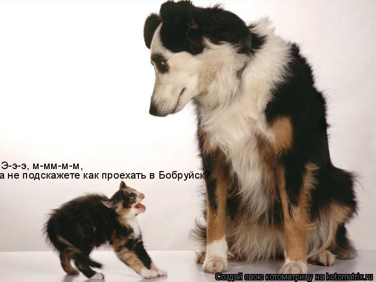 Котоматрица: Э-э-э, м-мм-м-м, а не подскажете как проехать в Бобруйск?