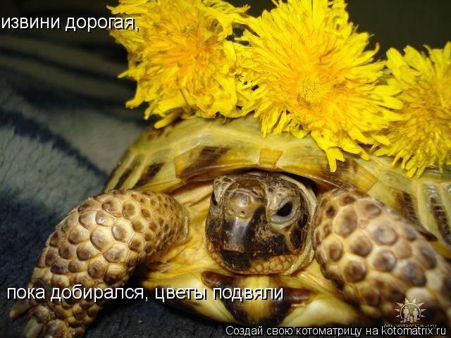 Котоматрица: пока добирался, цветы подвяли извини дорогая,